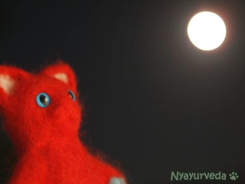 お月見ピッタ