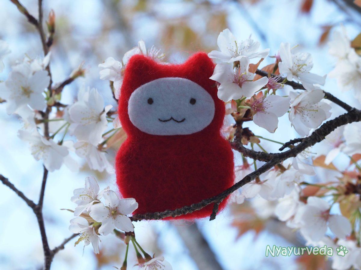 ダルマ桜2